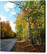 Driving Though The Birches Canvas Print