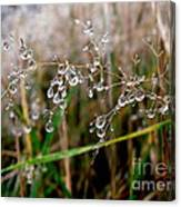 Droplets On Grass Canvas Print