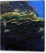 Drum Fish Canvas Print
