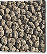 Dry Mud Patterns On The Racetrack Canvas Print