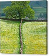 Dry Stone Wall And Lone Tree Canvas Print