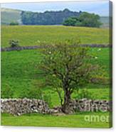 Dry Stone Wall And Twisted Tree Canvas Print
