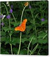 Dryas Iulia  Butterfly Canvas Print