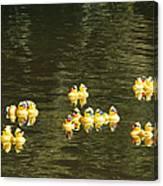 Duck Derby Ducks Canvas Print
