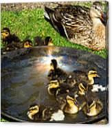Duck Family Joy In Garden  Canvas Print