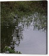 Duck In A Pond Canvas Print