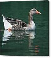 Duck On Water Canvas Print