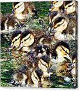 Duck-pile Canvas Print
