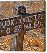 Duck Pond Trail Canvas Print