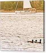 Duck Sailing Canvas Print