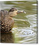 Duck Spits Canvas Print