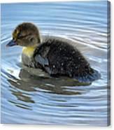 Duckling Pool Canvas Print