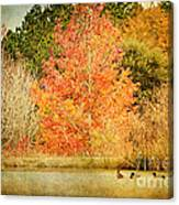 Ducks In An Autumn Pond Canvas Print