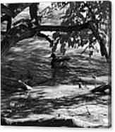 Ducks In The Shade In Black And White Canvas Print