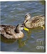 Ducks In The Sun Canvas Print