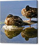 Ducks On A Spring Morning Canvas Print