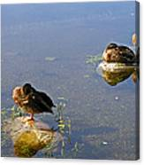 Ducks On The Lake Canvas Print