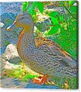 Duckside Canvas Print