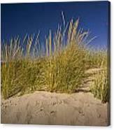 Dune And Beach Grass On Lake Michigan No.969 Canvas Print