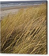 Dune Grass On The Oregon Coast Canvas Print