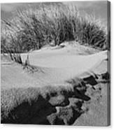 Dunes On A Staten Island Beach Canvas Print