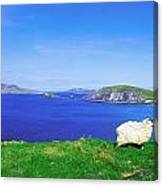 Dunmore Head, Blasket Islands, Dingle Canvas Print