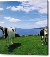 Durrus, Sheeps Head, Co Cork, Ireland Canvas Print