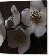 Dusk Blooms Canvas Print