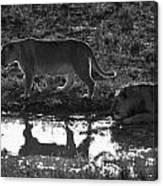 Dusk Reflections Canvas Print