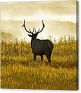 Dusky Elk Canvas Print