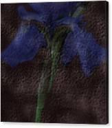 Dusty Iris Canvas Print