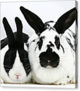 Dutch Rabbits Canvas Print