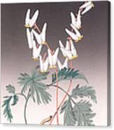 Dutdhman's Breeches Canvas Print