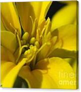 Dwarf French Marigold In Disco Yellow Canvas Print