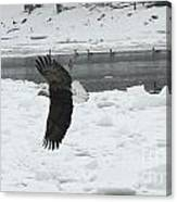 Eagle By River Canvas Print