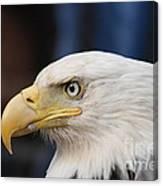 Eagle Head Canvas Print