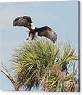 Eagle In The Palm Canvas Print