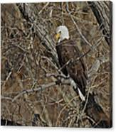Eagle In Tree 3 Canvas Print