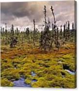 Eagle Plains, Yukon Territory, Canada Canvas Print