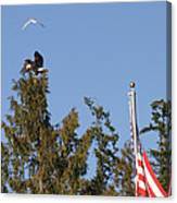 Eagle Rallies Round The Flagpole Canvas Print