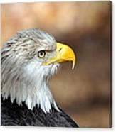 Eagle Right Canvas Print