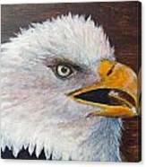 Eagle Study Canvas Print