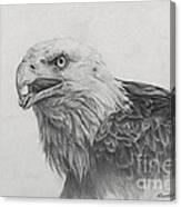 Eagles Quest Canvas Print