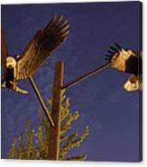 Eagles Suspended Canvas Print