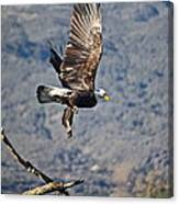 Eagle's Wings Canvas Print