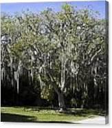 Ear Tree Canvas Print
