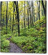 Early Autumn Hike Canvas Print
