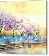 Early Morning 26 Canvas Print