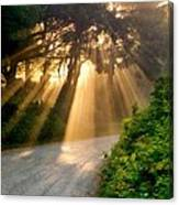 Early Morning Sunlight Canvas Print