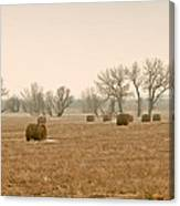 Earlying Morning Hay Bails Canvas Print